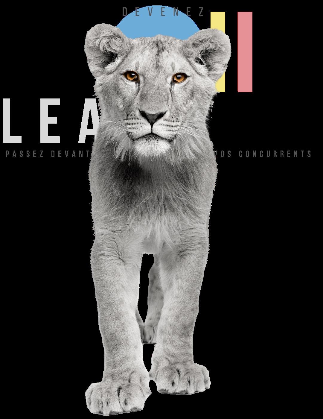 Devenez Leader dans votre secteur